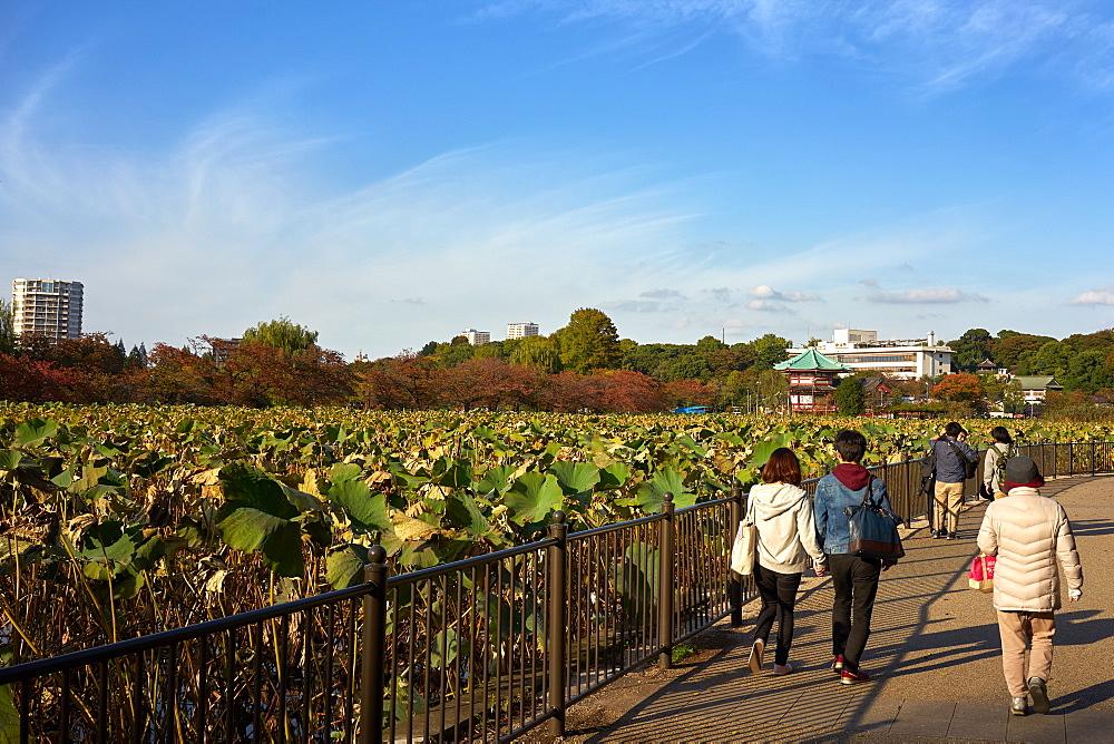 Ueno Park in Tokyo, Japan, Asia - 851-794