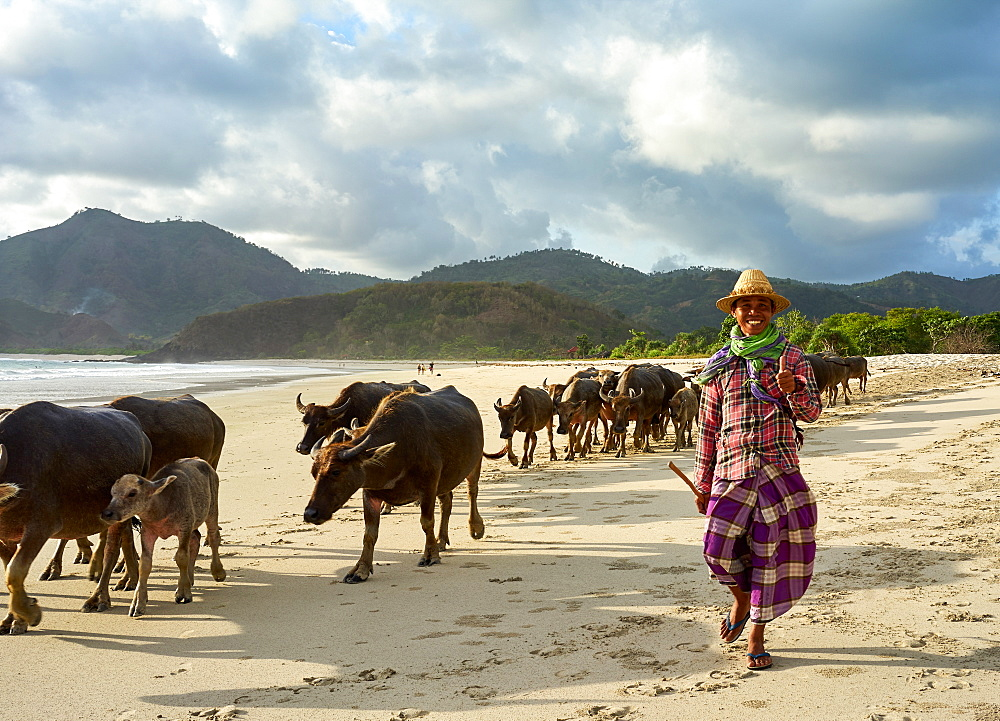 Herdsman and buffalos crossing the beach at Selong Belanak, as they return from grazing in the fields, Lombok, Indonesia, Southeast Asia, Asia - 851-870