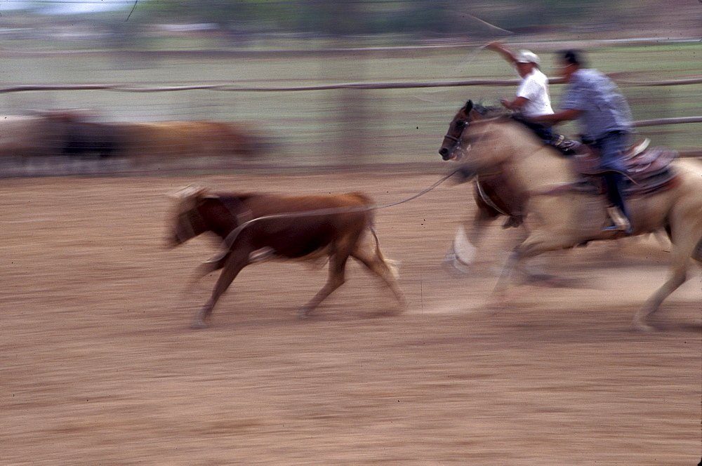 Calf roping event at a Navajo rodeo in Chinle, Arizona