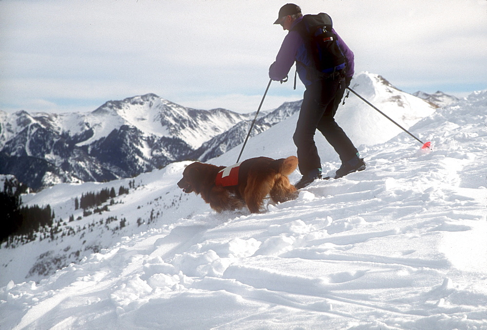 An avalanche rescue dog, trained to sniff out victims buried in avalanches, with his owner, handler at Wolf Creek Ski Area near Pagosa Springs, Colorado.