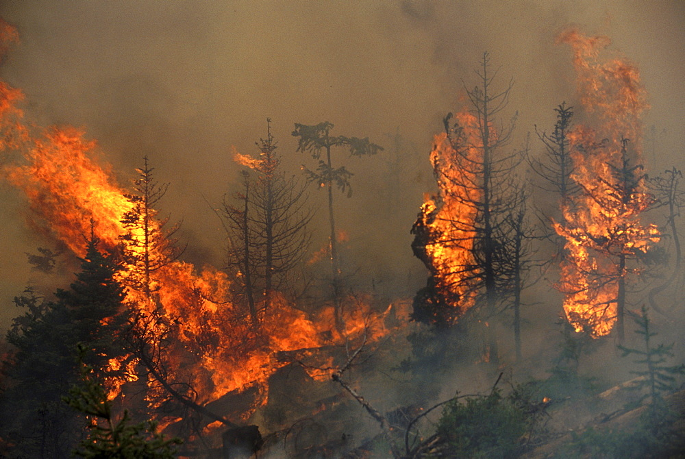 Controlled burn on Panther #10 clearcut on the Okanogan National Forest, WA to clear slash for replanting.