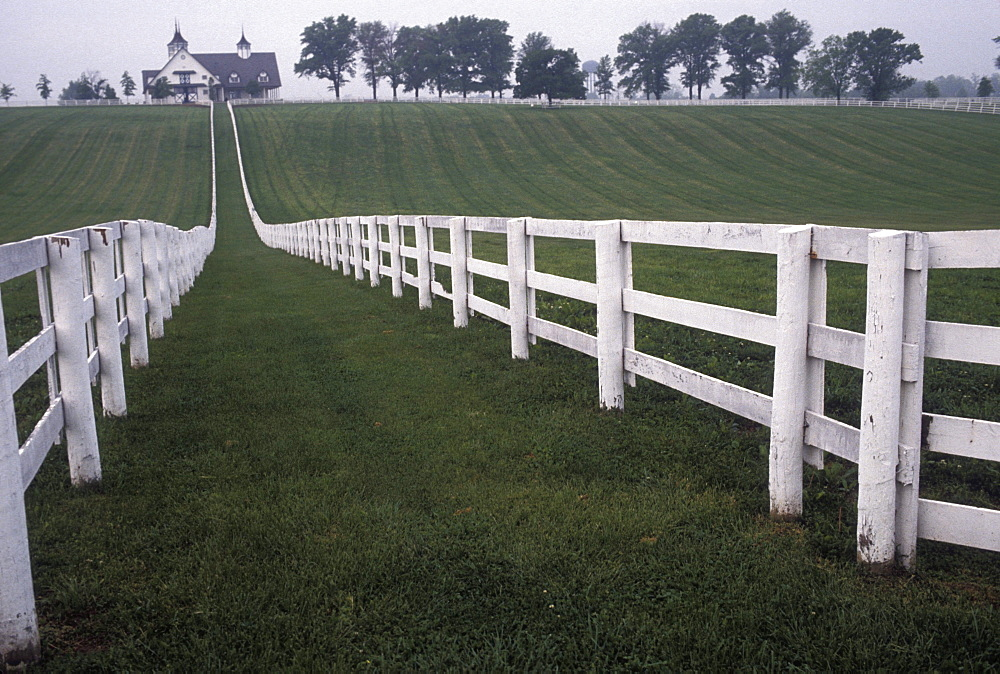 Horse farm near Lexington, Kentucky