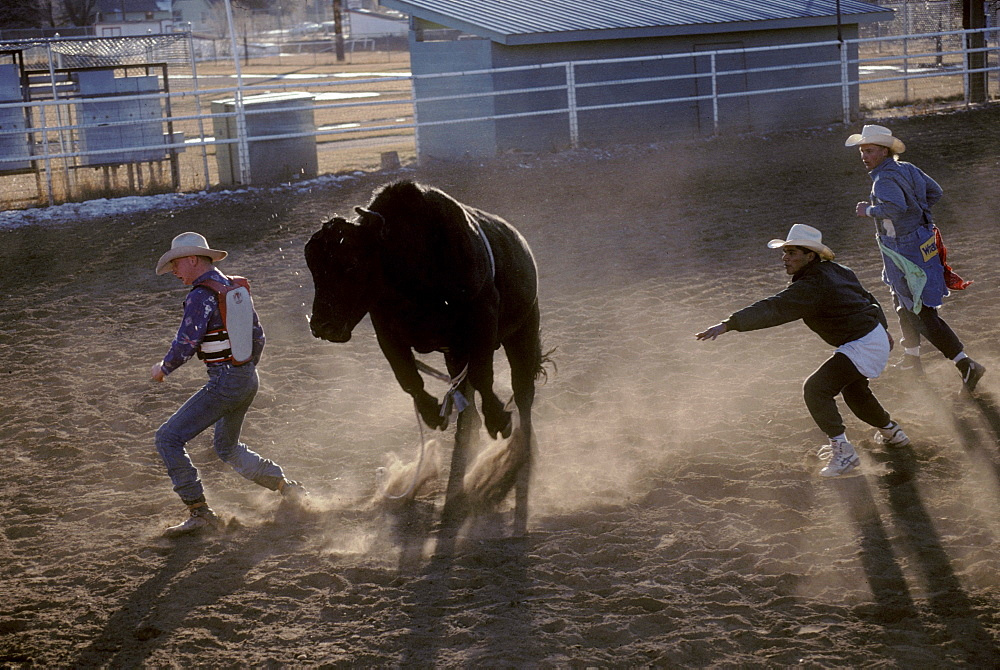 Rodeo clown students work a bull with rider at a rodeo school in Durango, Colorado