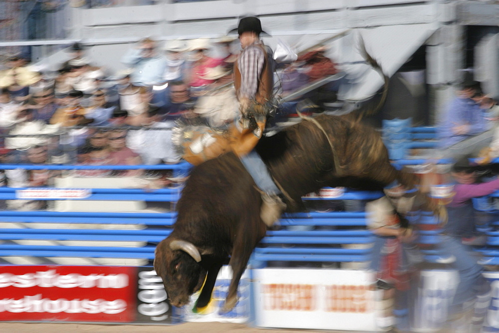 professional rodeo cowboys bull riding.