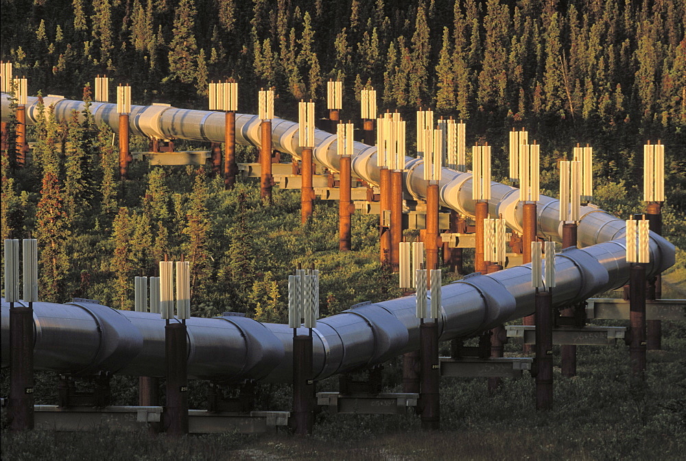 South of Delta Junction, Alaska. The supports are filled with anhydrous ammonia. In winter when temperatures drop below about minus 10C the ammonia above the ground turns to liquid and draws the heat from the ground and condenses.