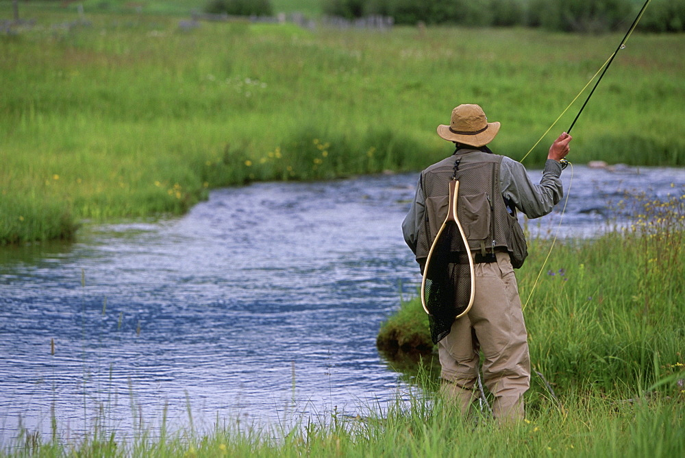 A rear-view of a fly-fisherman casting for trout on a small stream in the Rocky Mountains.