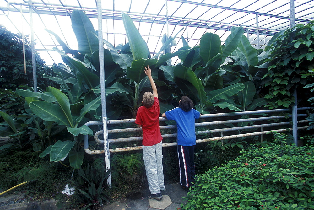 An Icelandic boy and an American boy examine tropical plants grown in greenhouses heated with geothermal water in Hveragerdi, Iceland. - 857-27010