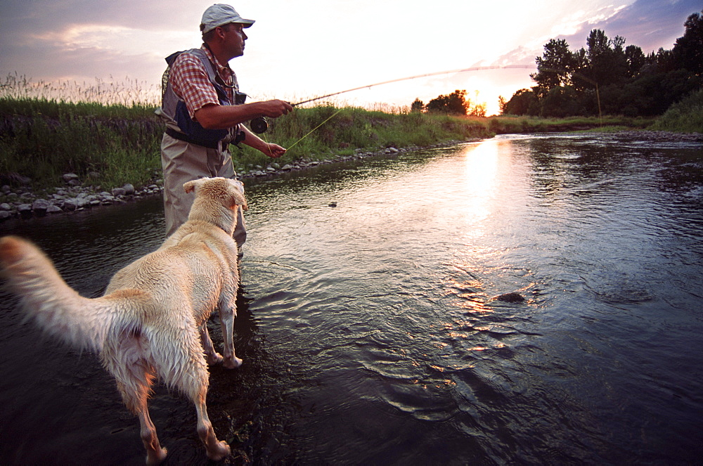 A fly fisherman casts his line on a summer evening in the North Fork of the Gallatin River while his white Labradore looks on near Bozeman, Montana