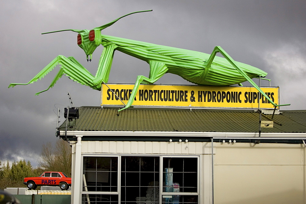 A corregated sculpture of a grasshopper perches on the roof of a horticulture supply store in Tirau, New Zealand on the north island. The small agricultural town of 800 has several such unique buildings including the Big Sheep Wool Gallery shaped like a sheep and the neighboring Big Dog Information Center  in the form of a dog.