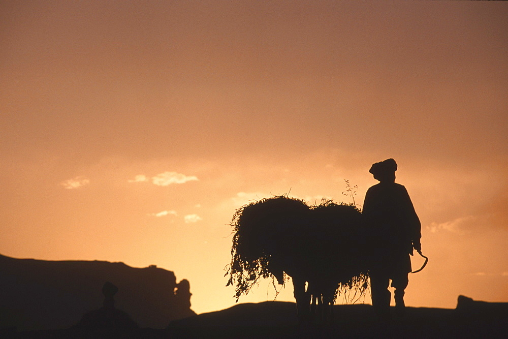 A farmer with his donkey loaded with forage walks toward the setting sun  above the town of Bamiyan, August 30, 2002.  Most of the old town was destroyed and up to 20,000 people of the region might have perished when Bamiyan fell to the Taliban in 2001. Bamiyan Valley is located in the Hazarajat at the edge of the Koh-i-Baba range , the end of the Hindu Kush.  Bamiyan was a prosperous Buddhist kingdom on the ancient Silk Road until the 10th century, when the region  was converted to Islam; in the 12th century, it was destroyed by Ghengis Khan. Most of the people of this region are of the Hazara tribe, and are Shi'a Moslems who have been persecuted for centuries by many of the Pashtun rulers of Afghanistan, who are from the Sunni sect.  They most recently suffered at the hand of the Taliban, who tried for years to ethnically cleanse the region of its Shi'a people