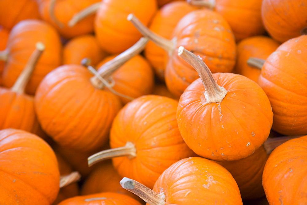 Pumpkin patch in Irvine, California