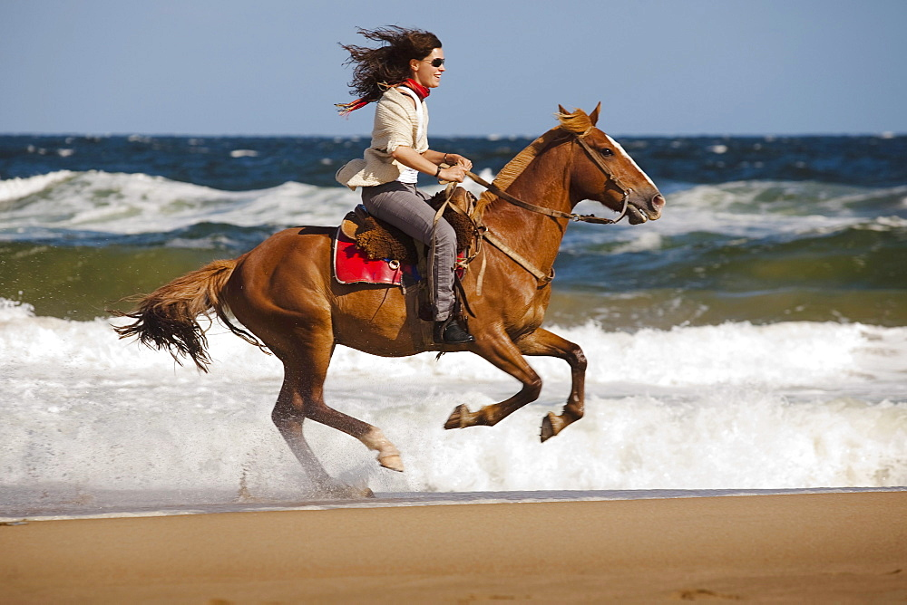 A woman rides a horse at the beach in Punta del Este, Uruguay. - 857-55648