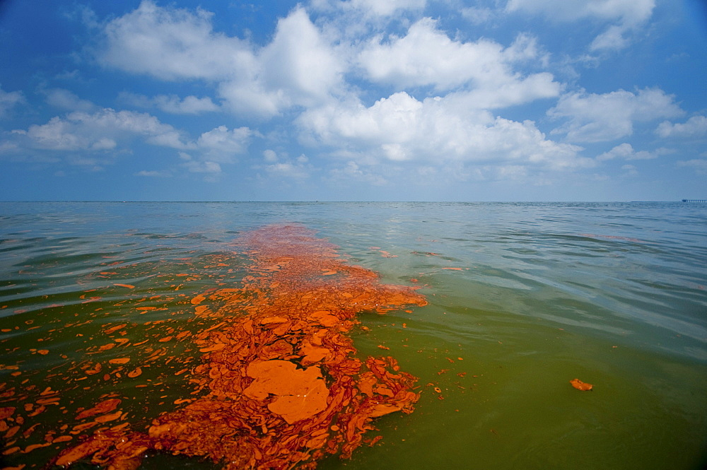 Near Grand Terre Island. Oil slicks on the surface are apparent everywhere.