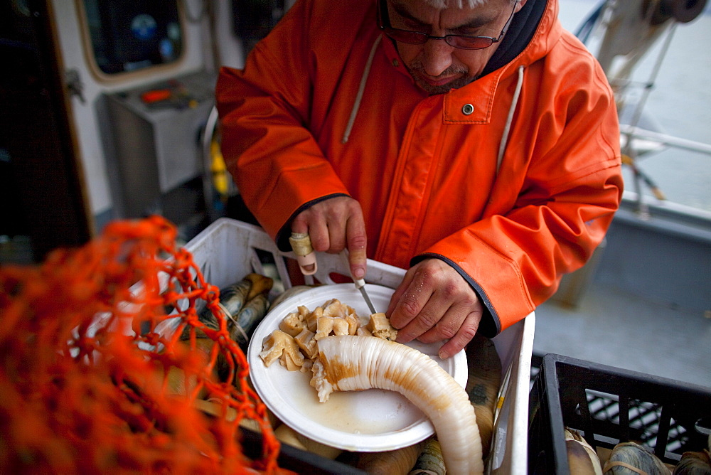 Boat captain cuts fresh geoduck for his crew to eat on deck while Native American divers, from the Suquamish Tribe, continue harvesting geoducks in Puget Sound near Suquamish, Washington