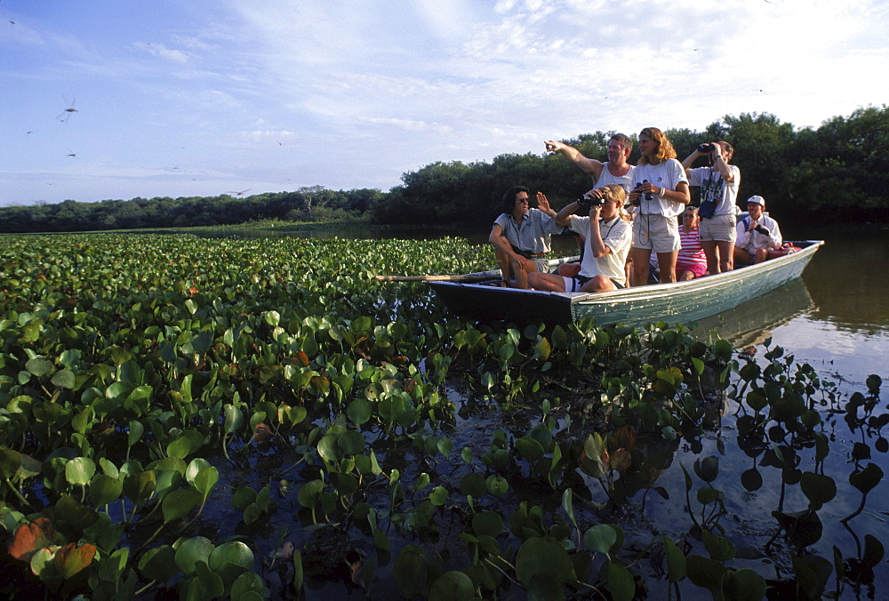 Tourists on water hyacint clogges waterway on Ato el Cedral ranch on the llanos, Venezuela, South America.