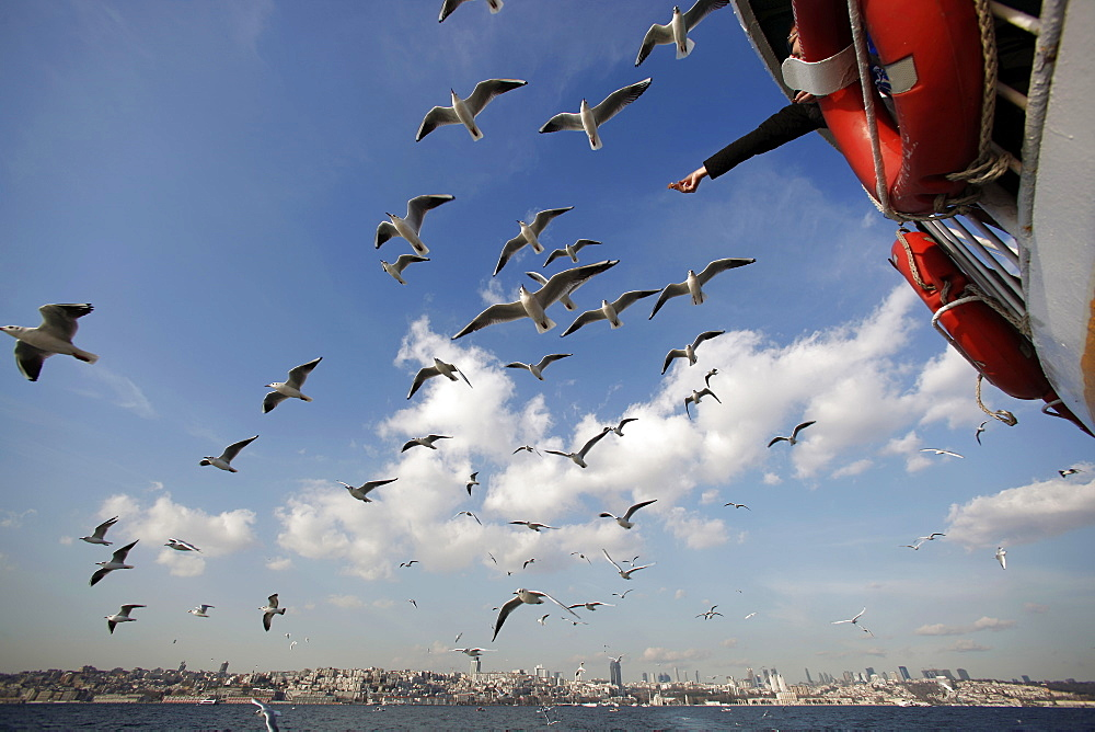 seagulls flying behind the ferry, Istanbul, Turkey