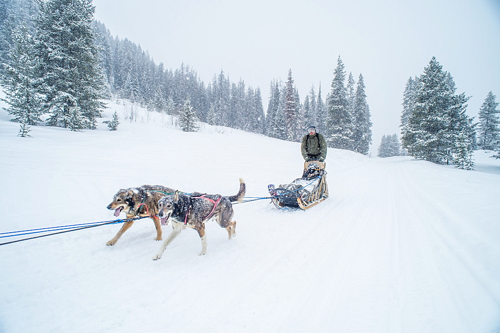 A dogsledder goes down a snow covered trail in Jackson Hole, Wyoming.
