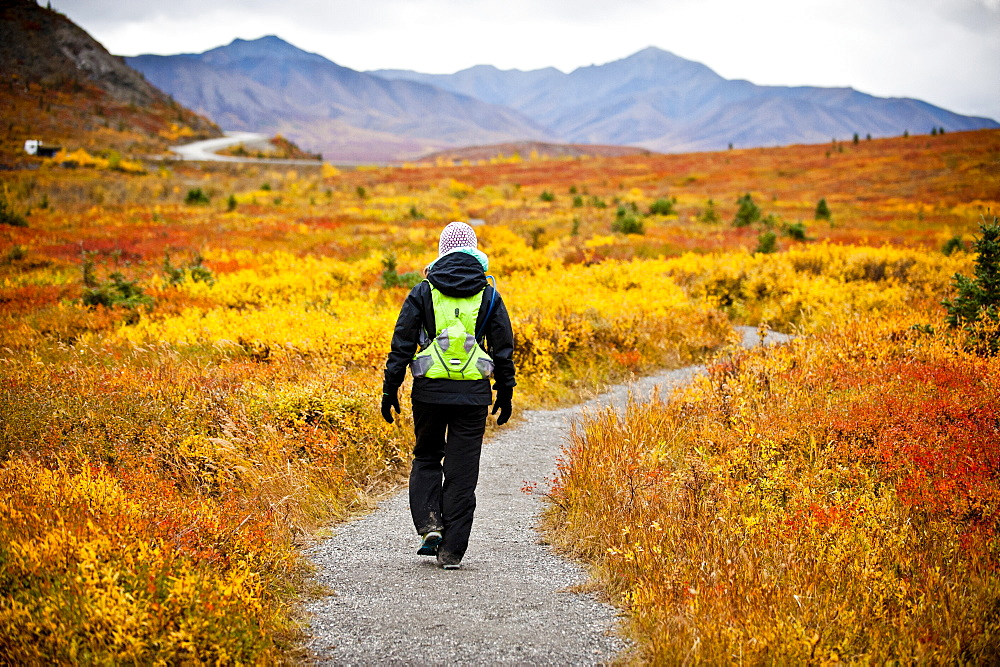 A girl hikes down a path through fall colors in Denali National Park.