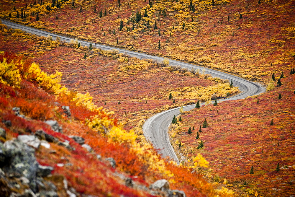 An empty road winds through the fall colors in Denali National Park.