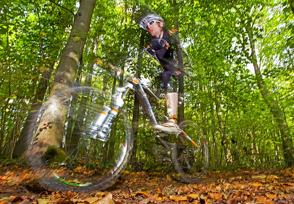 Mountain Bike rider..Single  rider racing through woodlands in Autumn/Fall during a cross country race.Forest of Dean,UK