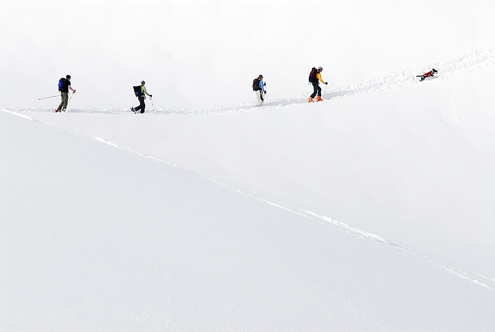 Andrew Fodor, Sheri Kashman, Senja Palonen, Tony Chan and Daisy skinning up to a powdery descent from Table Mountain. Mt. Baker backcountry. Glacier, Washington, USA, United States of America