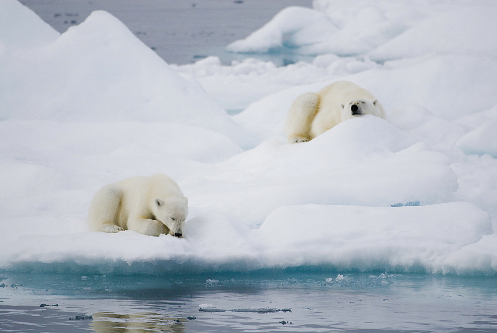 Polar bears (Ursus maritimus) sleeping on pack ice, Hinlopen Straight, Spitsbergen/Svalbard, Norway, on 28 July 2007. Polar bears primary habitat of sea ice is threatened due to global warming and rising temperatures in the Arctic regions, Norway