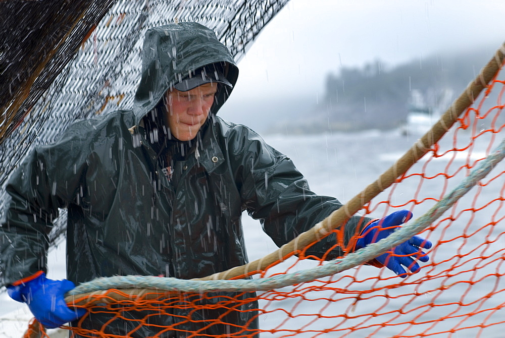 "08/15/08 Crew member Nick Demmert hauls in the net while sein fishing on Captain Larry Demmert's boat just off of the outer islands west of Prince of Whales Island in SE Alaska. This is a native fishing hole. At this time they were catching mostly ""humpies"", United States of America"
