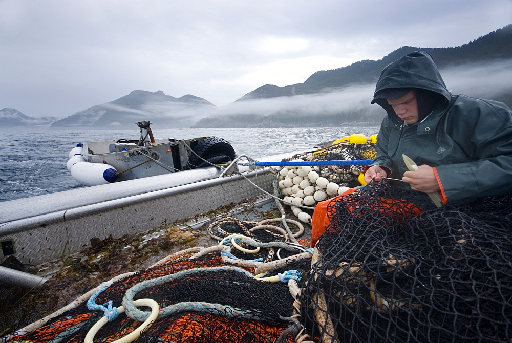 """08/15/08 Crew member Nick Demmert repairs the net while sein fishing on Captain Larry Demmert's boat just off of the outer islands west of Prince of Whales Island in SE Alaska. This is a native fishing hole. At this time they were catching mostly """"humpies"""", United States of America"""
