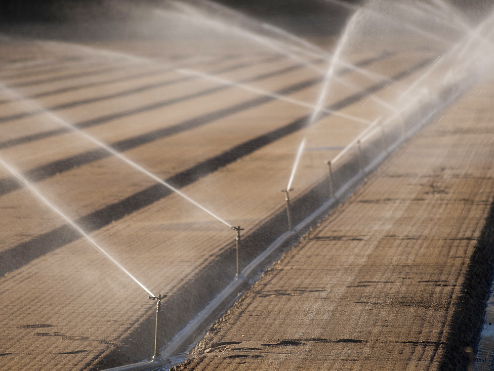 Farm land being irrigated with sprinklers in Santa Maria, California, United States, United States of America