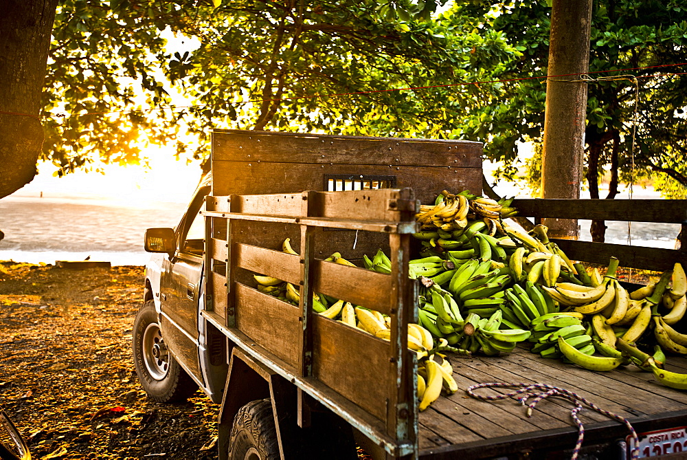 A truck filled with bananas sits on the beach.