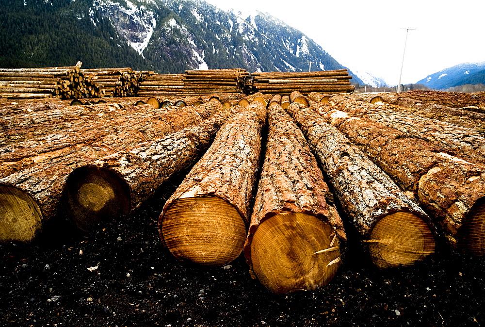 A row of freshly cut logs in Canada.