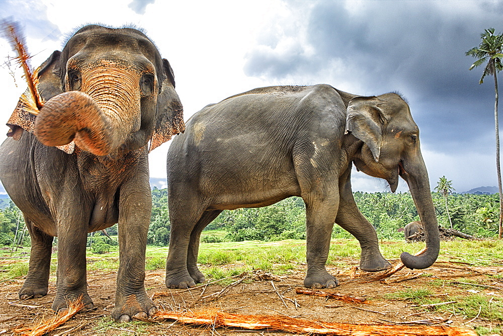 Elephant family at Elephant Orphanage in Pinnawela, Sri Lanka