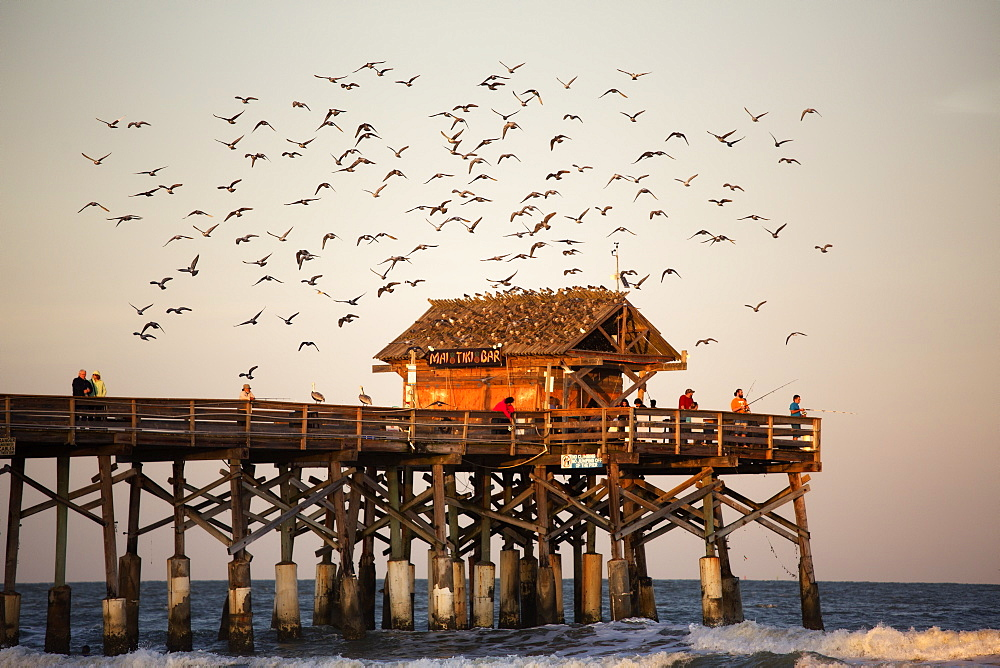 Flock Of Birds Flying Off A Pier At Cape Canaveral, Florida