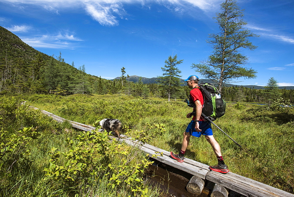 Man Walking On Boardwalk With His Dog While Hiking In White Mountains