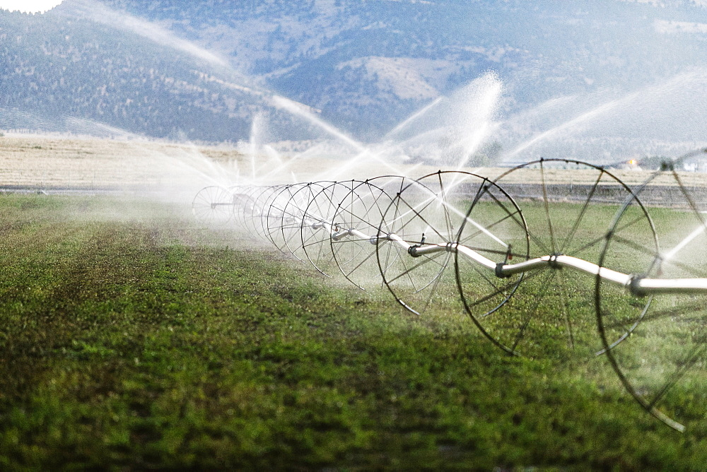 Irrigation sprinklers in the state of Washington