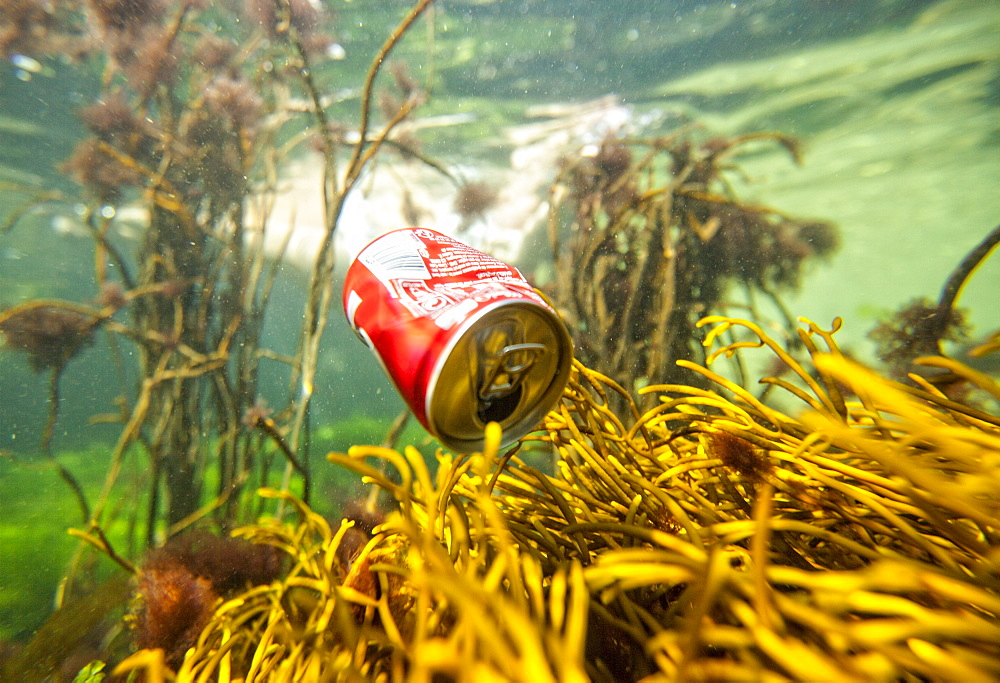 Soda Can Floating Underwater In The Ocean Near Coral Reef