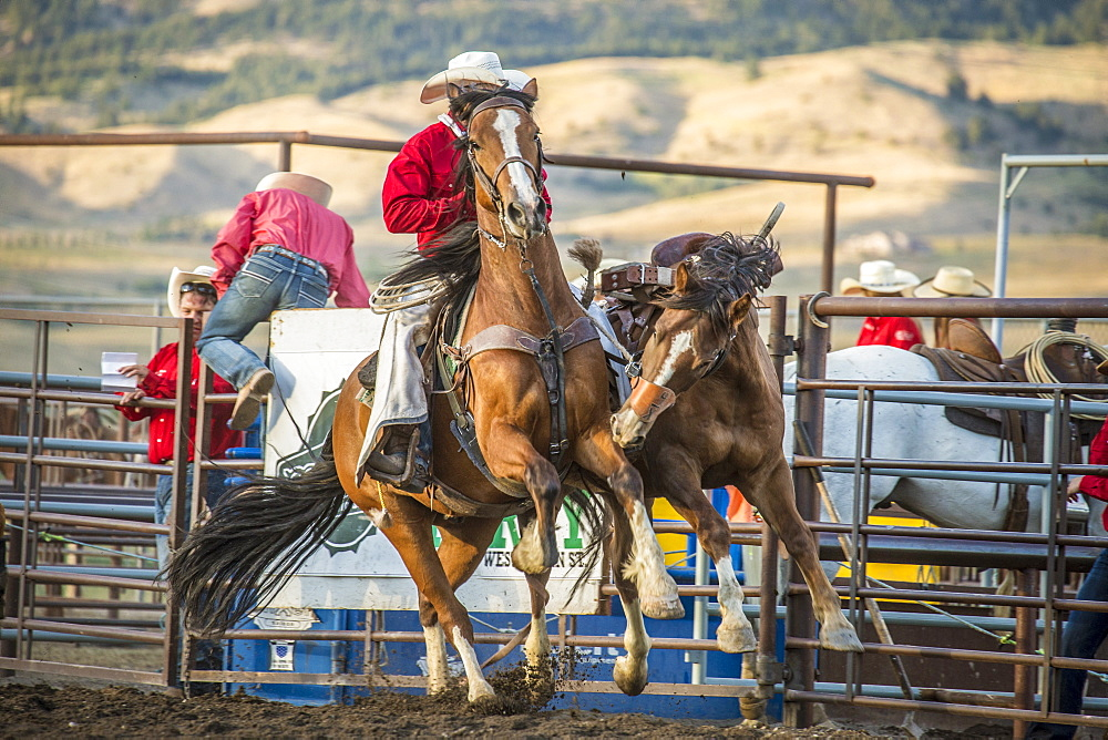 cowboy pickup man with bucking bronco in arena