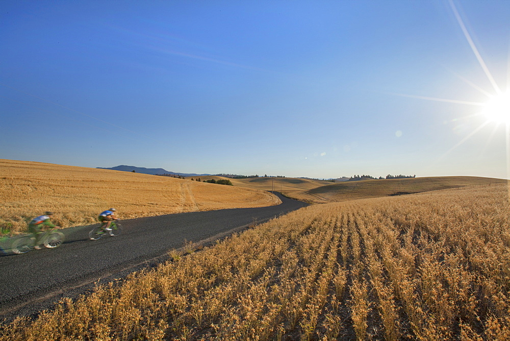 Three Cyclists Riding Through The Hilly Countryside Of The Palouse In Moscow, Idaho