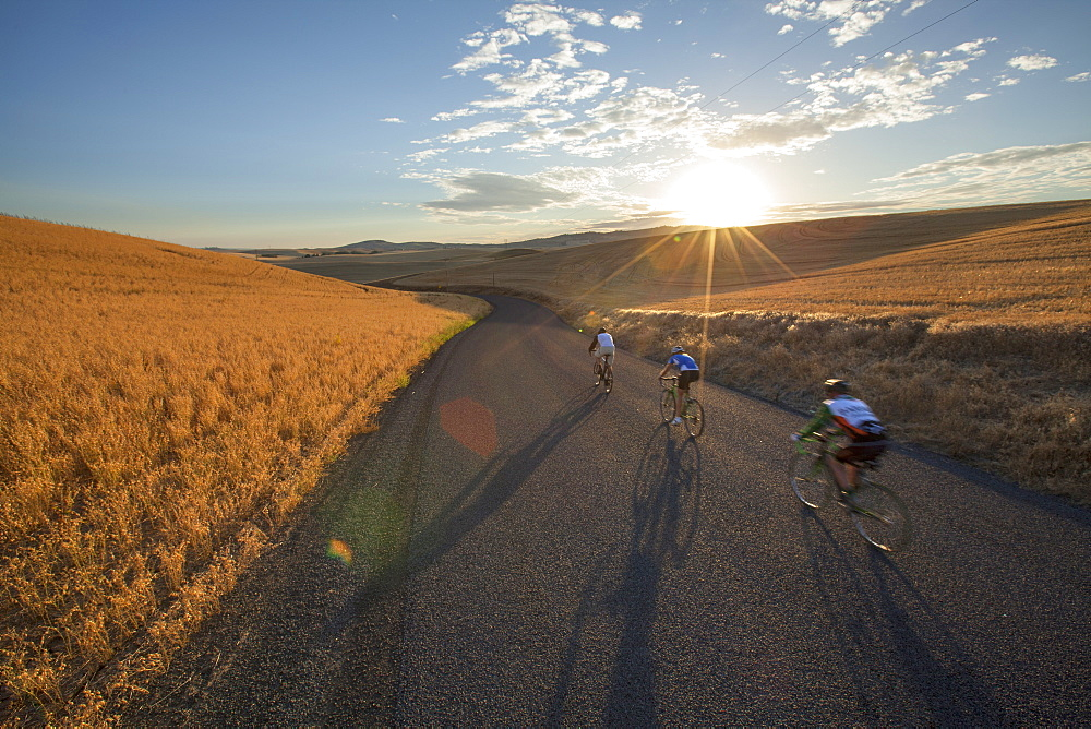 Three Cyclists Riding Road Bikes Through The Hilly Countryside Of The Palouse In Moscow, Idaho