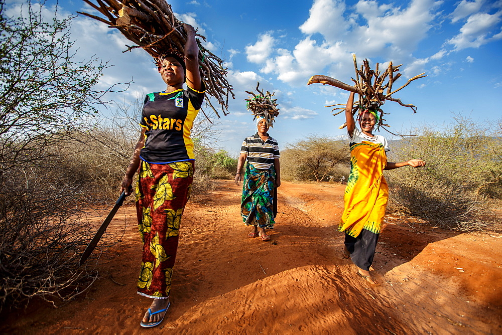 "Zainabu Ramadhani, 19, (yellow and red patterned skirt) her mother Fatma Mziray, age 38, (blue head dress) and Fatma's sister-in-law Zaitun Hamad, 18, (orange wrap and white top) walk home after gathering firewood near Fatma's home in Mforo. Mforo is near Moshi, Tanzania.   Fatma Mziray is a Solar Sister entrepreneur who sells both clean cookstoves and solar lanterns. Fatma heard about the cookstoves from a Solar Sister development associate and decided to try one out. The smoke from cooking on her traditional wood stove using firewood was causing her to have a lot of heath problems, her lungs congested her eyes stinging and her doctor told her that she had to stop cooking that way. Some days she felt so bad she couldn't go in to cook. Fatma said, ""Cooking for a family, preparing breakfast, lunch and dinner I used to gather a large load of wood every day to use. Now with the new cook stove the same load of wood can last up to three weeks of cooking.   ""With the extra time I can develop my business. I also have more time for the family. I can monitor my children's studies. All of this makes for a happier family and a better relationship with my husband. Since using the clean cookstove no one has been sick or gone to the hospital due to flu.""  Fatma sees herself helping her community because she no longer sees the people that she has sold cookstoves have red eyes, coughing or sick like they used to be. She has been able to help with the school fees for her children, purchase items for the home and a cow.  ""What makes me wake up early every morning and take my cookstoves and go to my business is to be able to take my family to school as well as to get food and other family needs."""