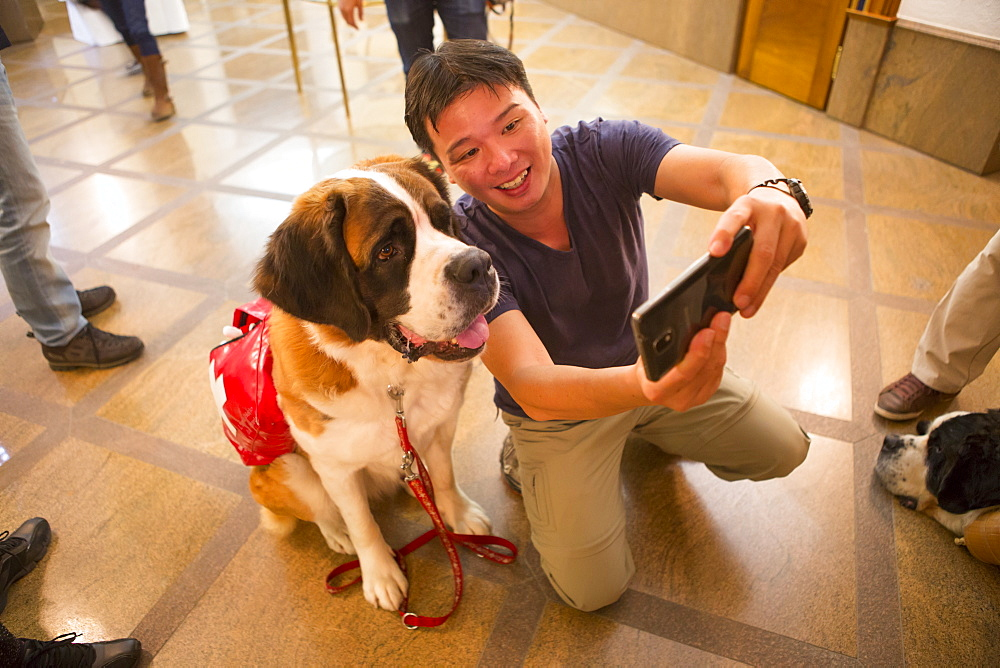 Asian tourist taking selfie with Saint Bernard dog, Zermatt, Valais, Switzerland