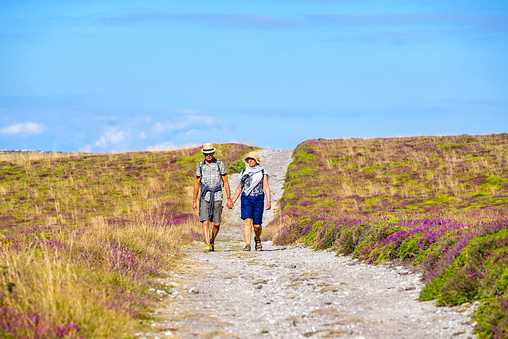 Couple walking past heather flowers on Pointe du Pen-Hir, Bretagne, France - 857-94882