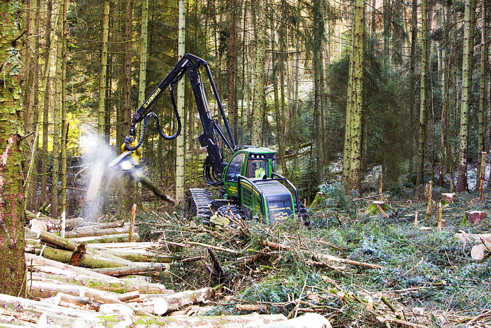 Tree harvester working in Grizedale Forest, Lake District, UK