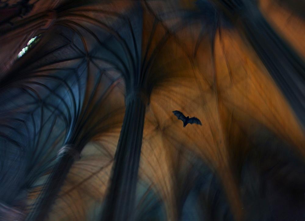 Bat flying inside San Sebastian Basilica, only all-steel church in Asia, Quiapo, Manila, Philippines
