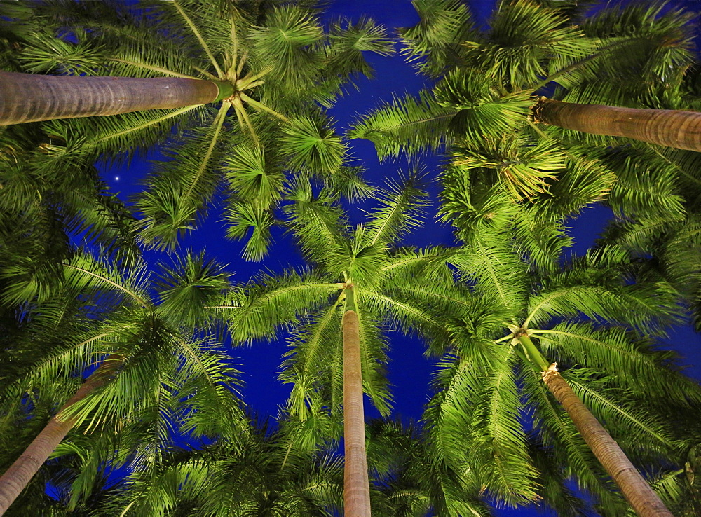 View from below of palm trees at night, Makati, Philippines