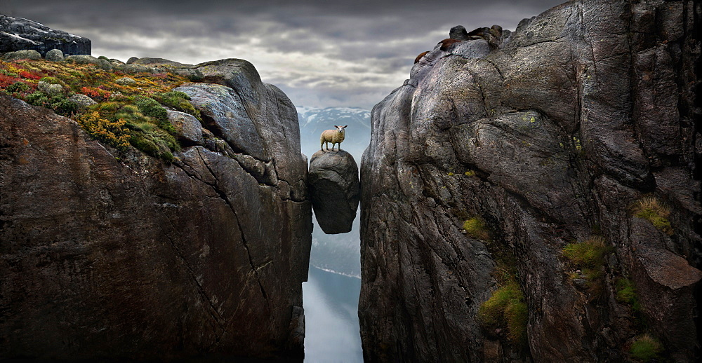 Sheep on famous boulder Kjeragbolten wedged 1000m above sea in mountain crevasse by edge of Kjerag mountain, Lysefjord, Rogaland, Norway