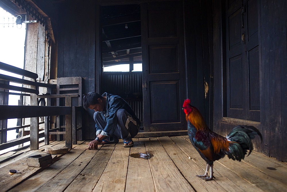 Chicken standing in front of young man crouching and preparing food on wooden porch, Myanmar, Shan, Myanmar
