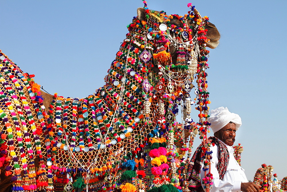 A decorated camel at camel decoration competition during desert festival, Jaisalmer, India