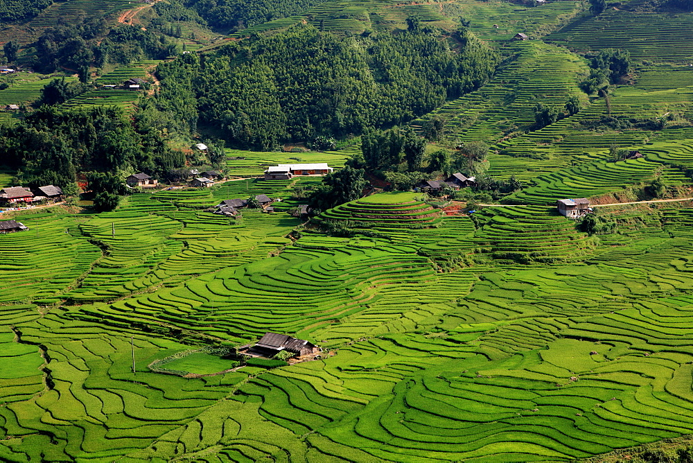 Wet rice is commonly grown in terraced mountain valley of northern Vietnam surrounding Sapa, Lao Cai, Vietnam - 858-21