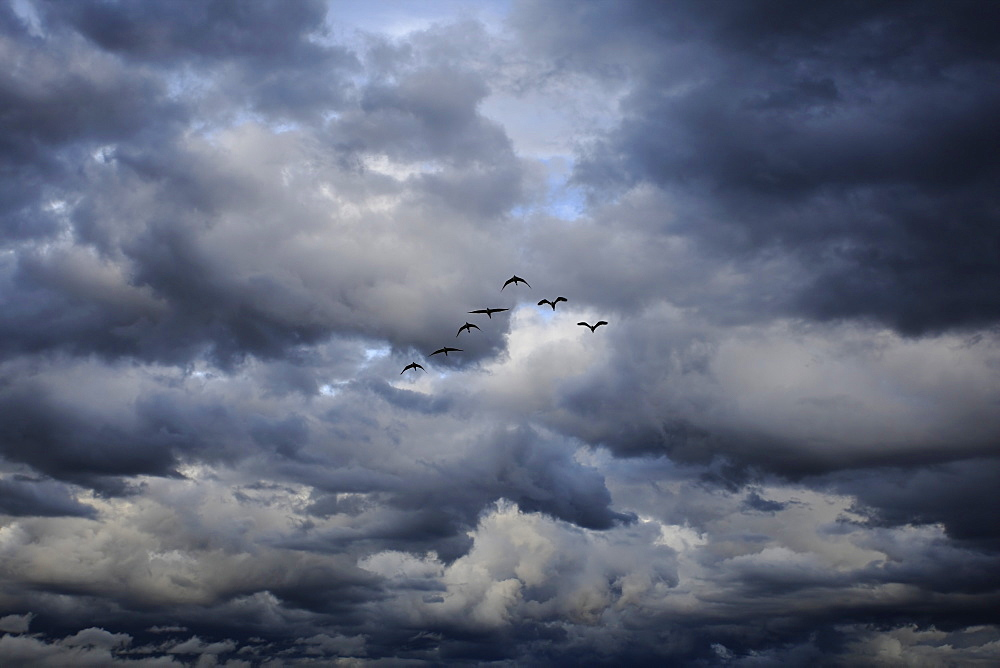 Formation flying in the clouds, East Africa